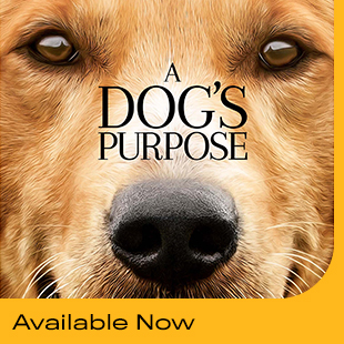 Dogs Purpose 2 310 X 310